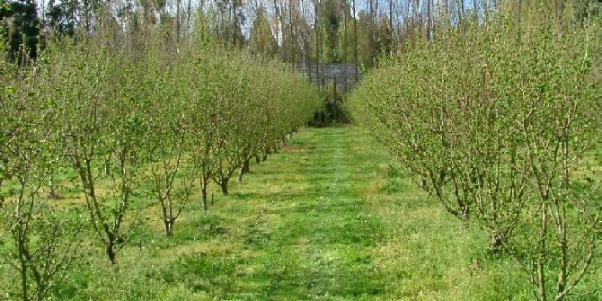 Spring Time Orchard